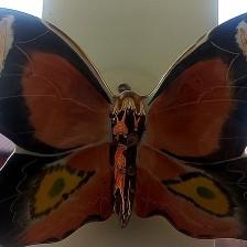 F som i Fjäril