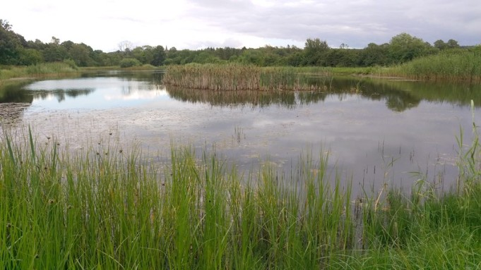 Framme vid dammen