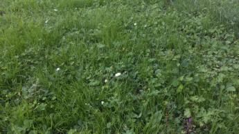 2 på min nysådda gräsplätt