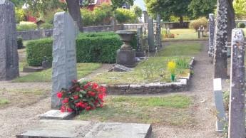 Klinte kyrkogård - Dragon wing har verkligen utvecklats bra