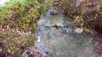 Nu är det vatten i ån i alla fall, men någon fisk syntes inte till