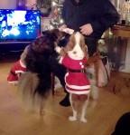 Dags för julkappsutdelning och hundarna fick sina julklappar först av alla