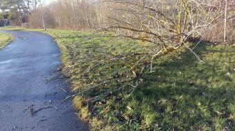 Nästan hemma - ett träd har blåst om kull
