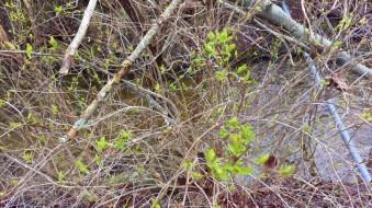 Det grönskar längs Robbjensån