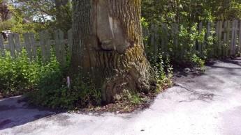 Här står skylten bredvid eken
