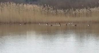Och rätt många fåglar